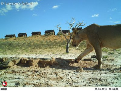 Bushenell Cameras, !Xaus Lodge Kgalagadi Game Reserve