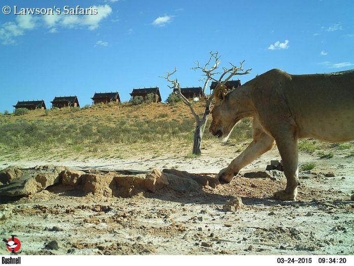 Bushenell Cameras, !Xaus Lodge Kgalagadi Game Reserve
