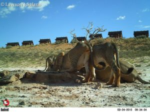 Bushenell Cameras, !Xaus Lodge Kgalagadi Game Reserve3