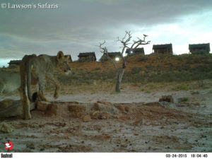 Bushenell Cameras, !Xaus Lodge Kgalagadi Game Reserve5