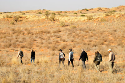 kgalagadi transfrontier park walking safari