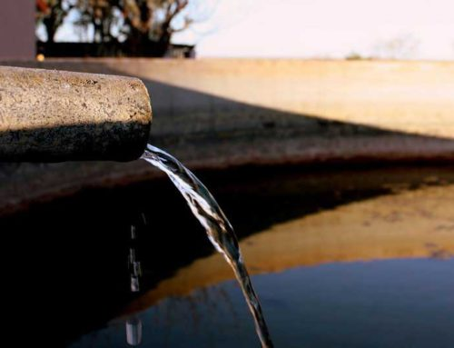 Living with limited water in the desert