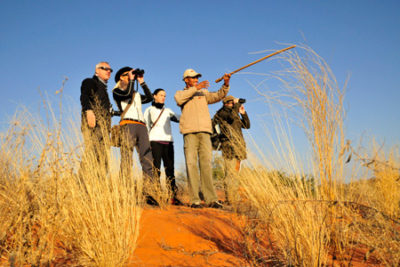 kgalagadi transfrontier park guided walk