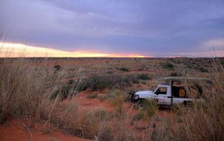 kgalagadi transfrontier park sunset game drive