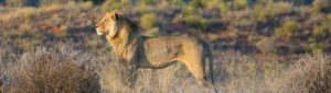 Xaus lodge kgalagadi accommodation wildlife